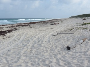Playa San Martin, Cozumel, MX.
