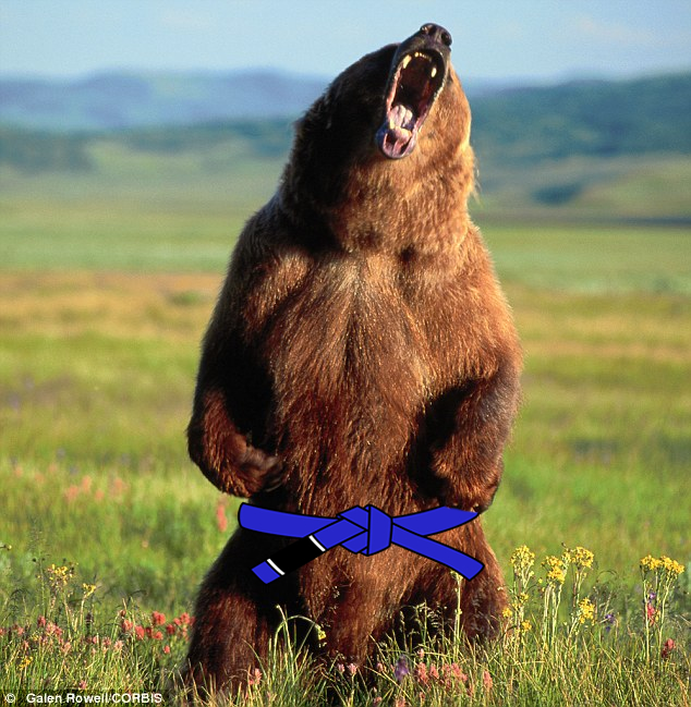 Blue Belted Bear spotted in the Copacabana!
